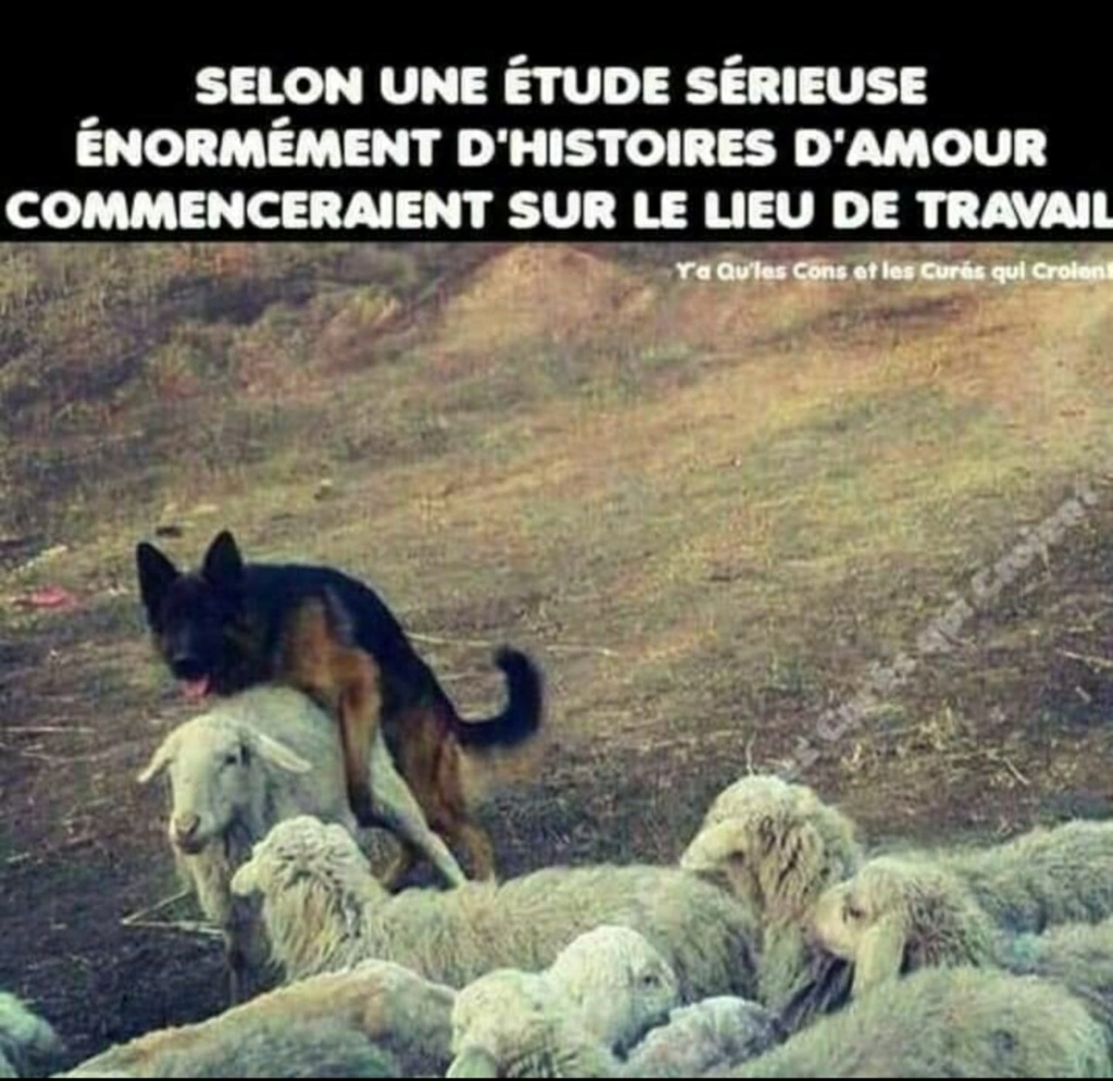 humour - Page 2 19733610
