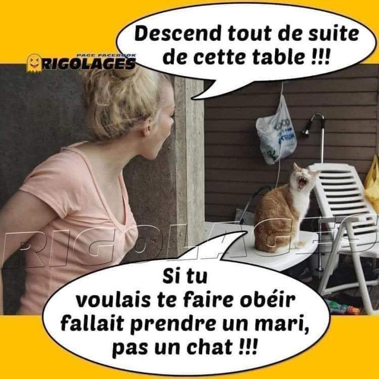 humour - Page 3 19882310