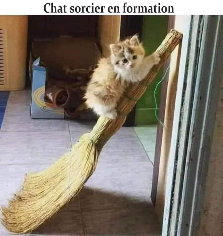 humour - Page 7 22130810
