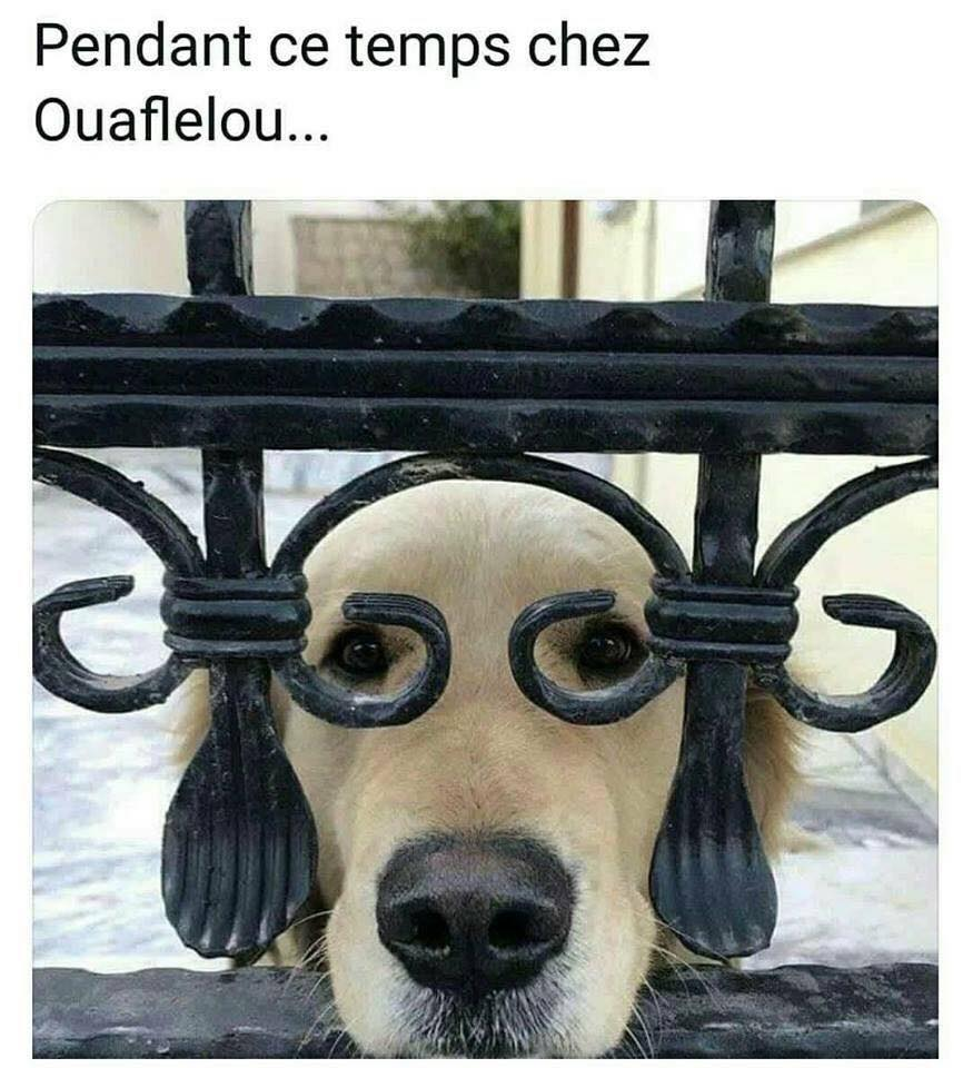 humour - Page 7 22621010