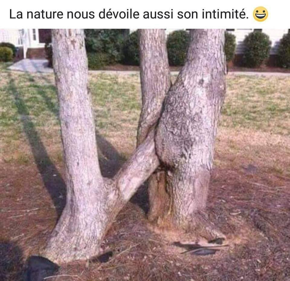 humour - Page 17 36696310