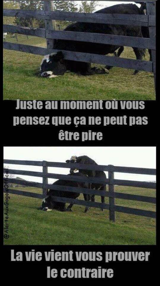 humour - Page 17 39453710