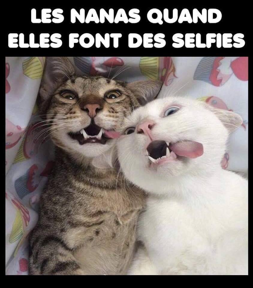 humour - Page 23 42710710