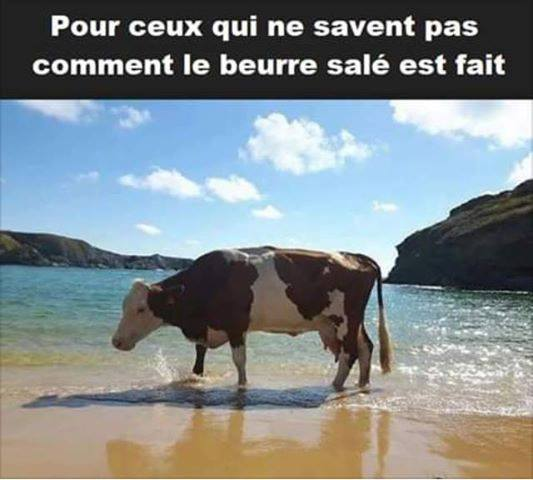humour - Page 23 62383210