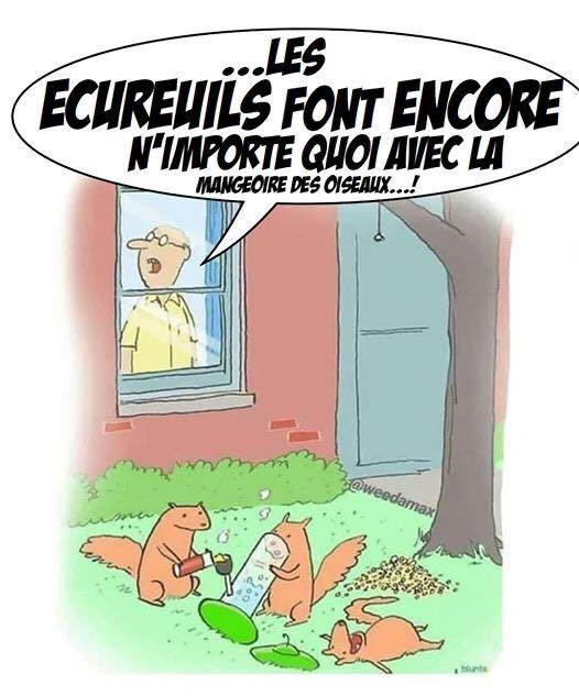 humour - Page 32 87618810