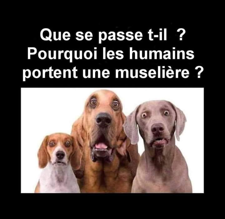 humour - Page 36 91861110