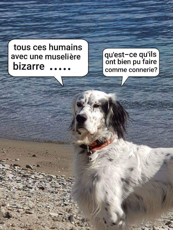 humour - Page 35 92354010