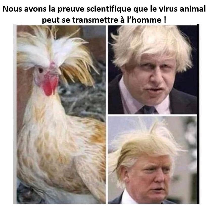 humour - Page 39 95477310