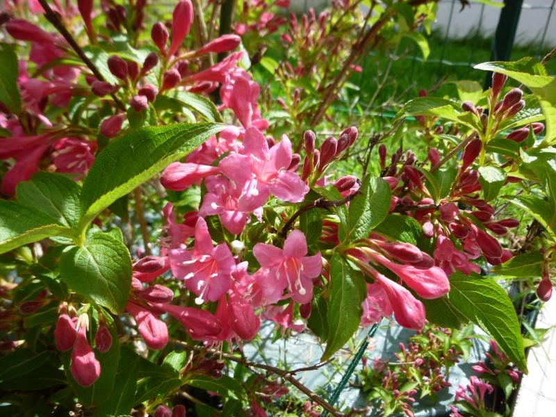 que cest beau le printemps..  - Page 5 P1000238