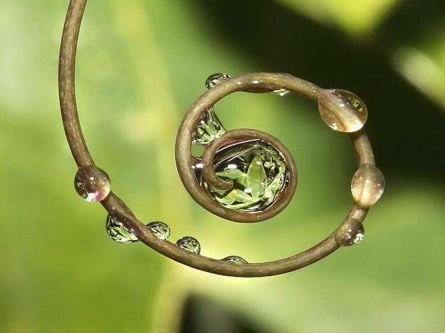La spirale, mouvement de vie. - Page 4 Image256