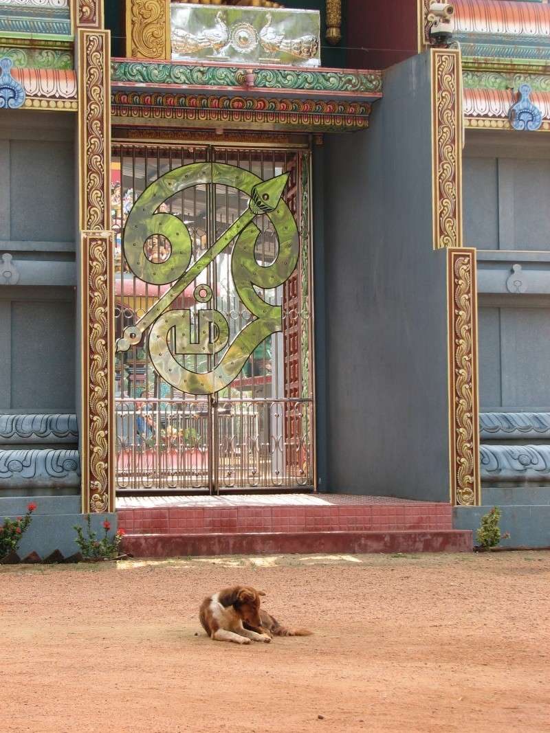Mon reportage sur les chiens d'ailleurs 2014_m12