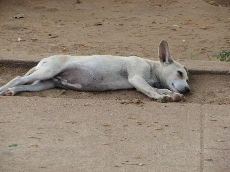 Mon reportage sur les chiens d'ailleurs 2014_m13