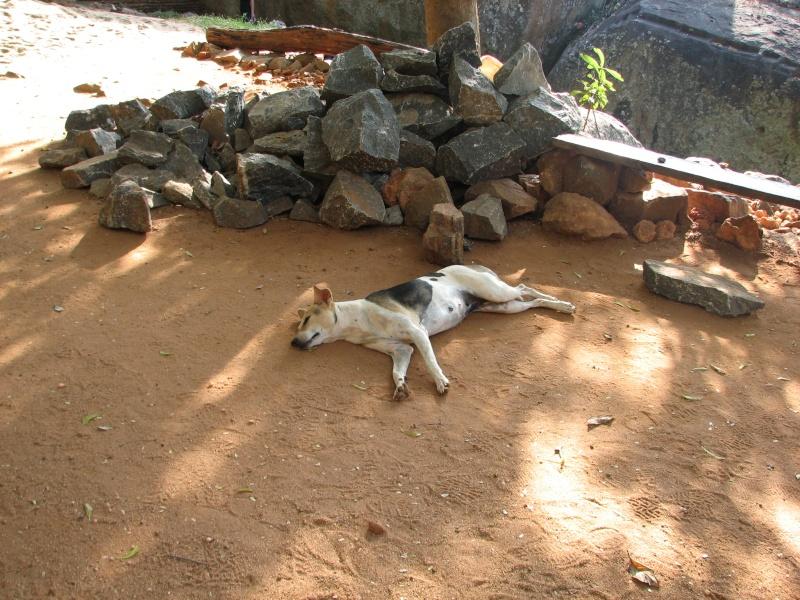 Mon reportage sur les chiens d'ailleurs 2014_m14