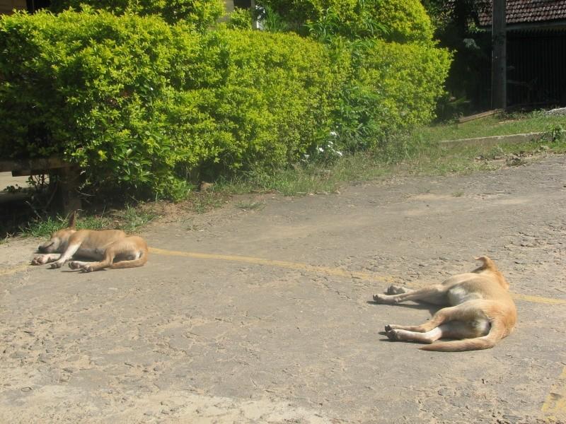 Mon reportage sur les chiens d'ailleurs 2014_m18