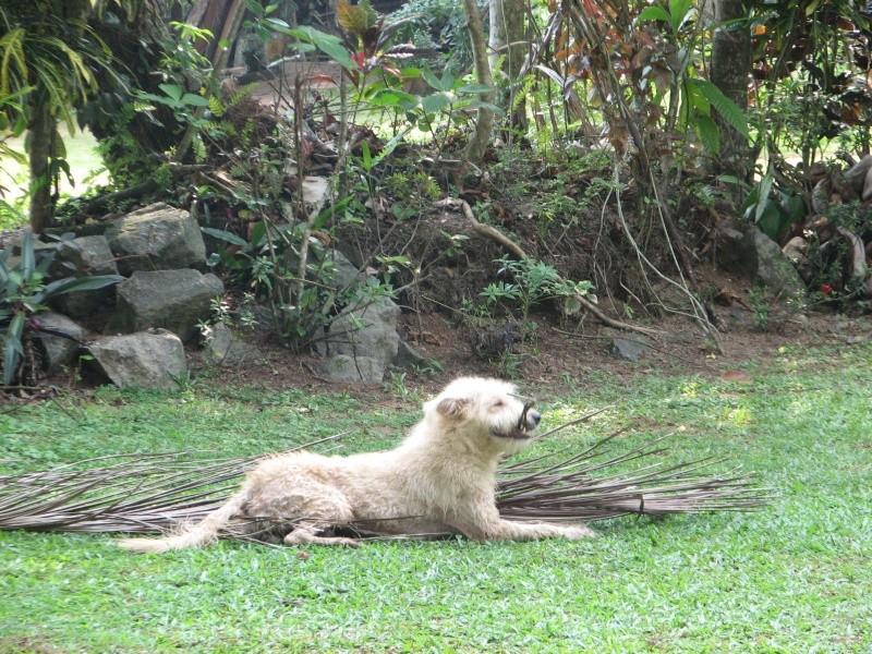 Mon reportage sur les chiens d'ailleurs 2014_m21