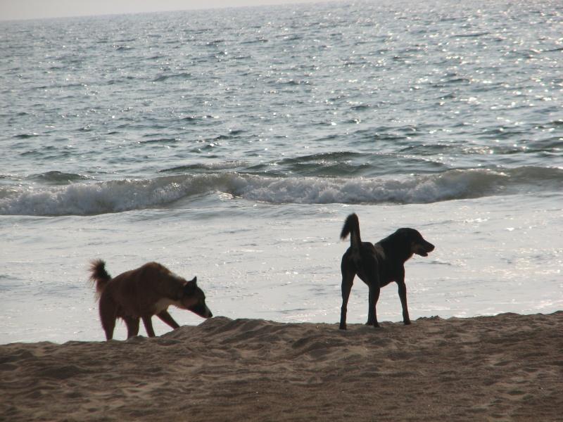 Mon reportage sur les chiens d'ailleurs 2014_m22