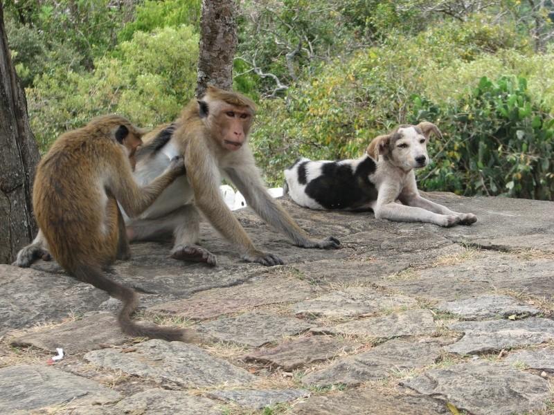 Mon reportage sur les chiens d'ailleurs 2014_m23