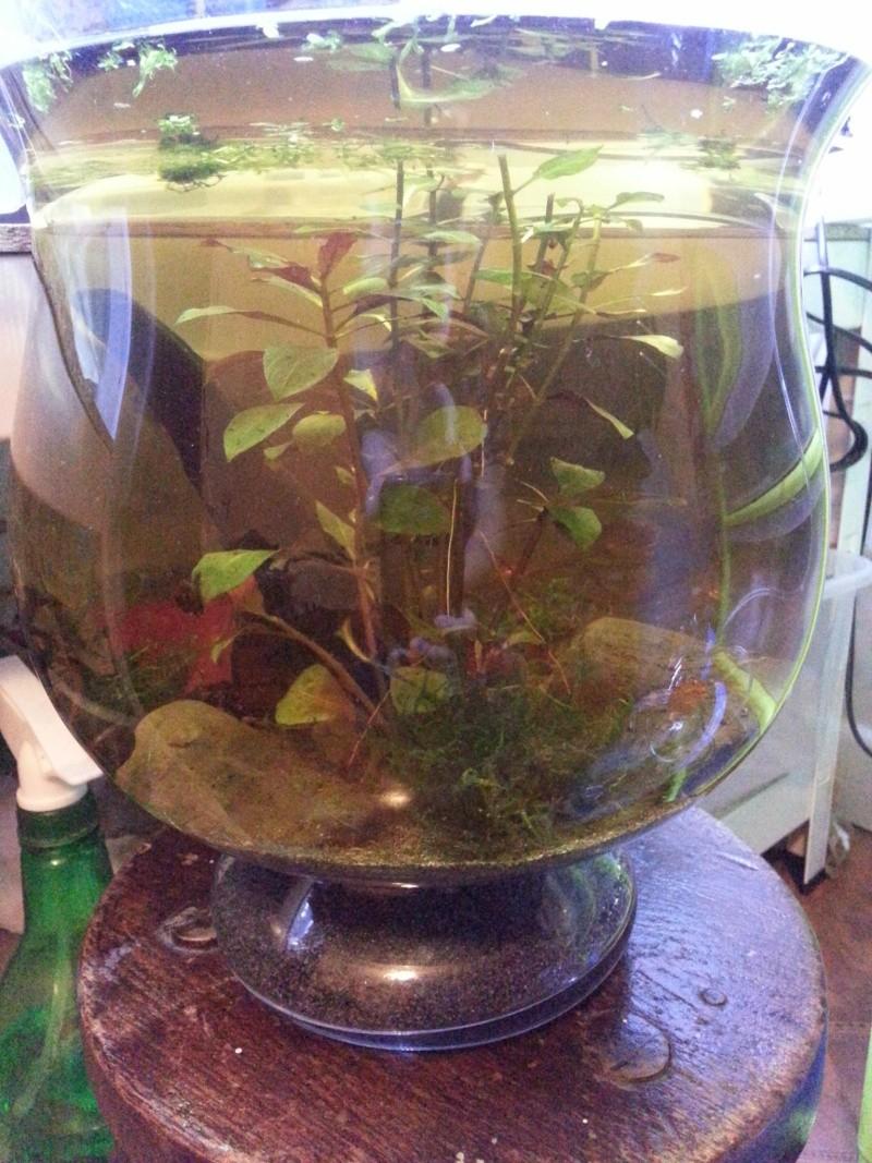 aquascape vase 8L 20140111