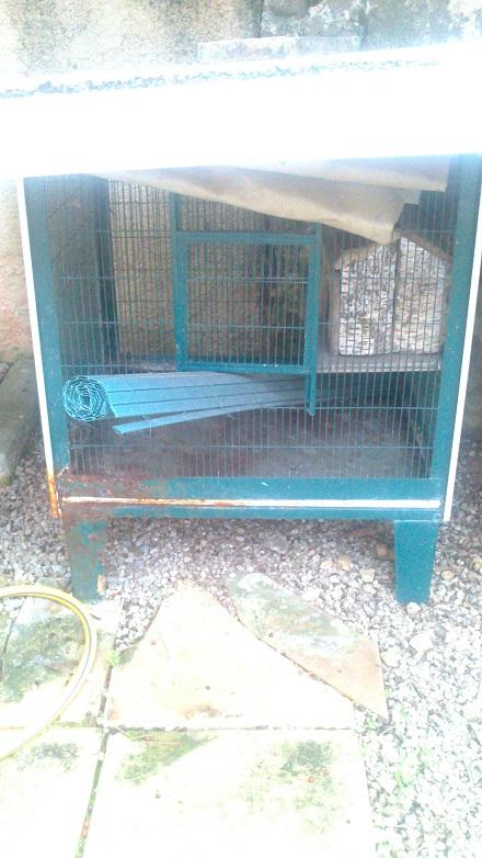 Ma cage pourrait-elle convenir ? Dsc_0811