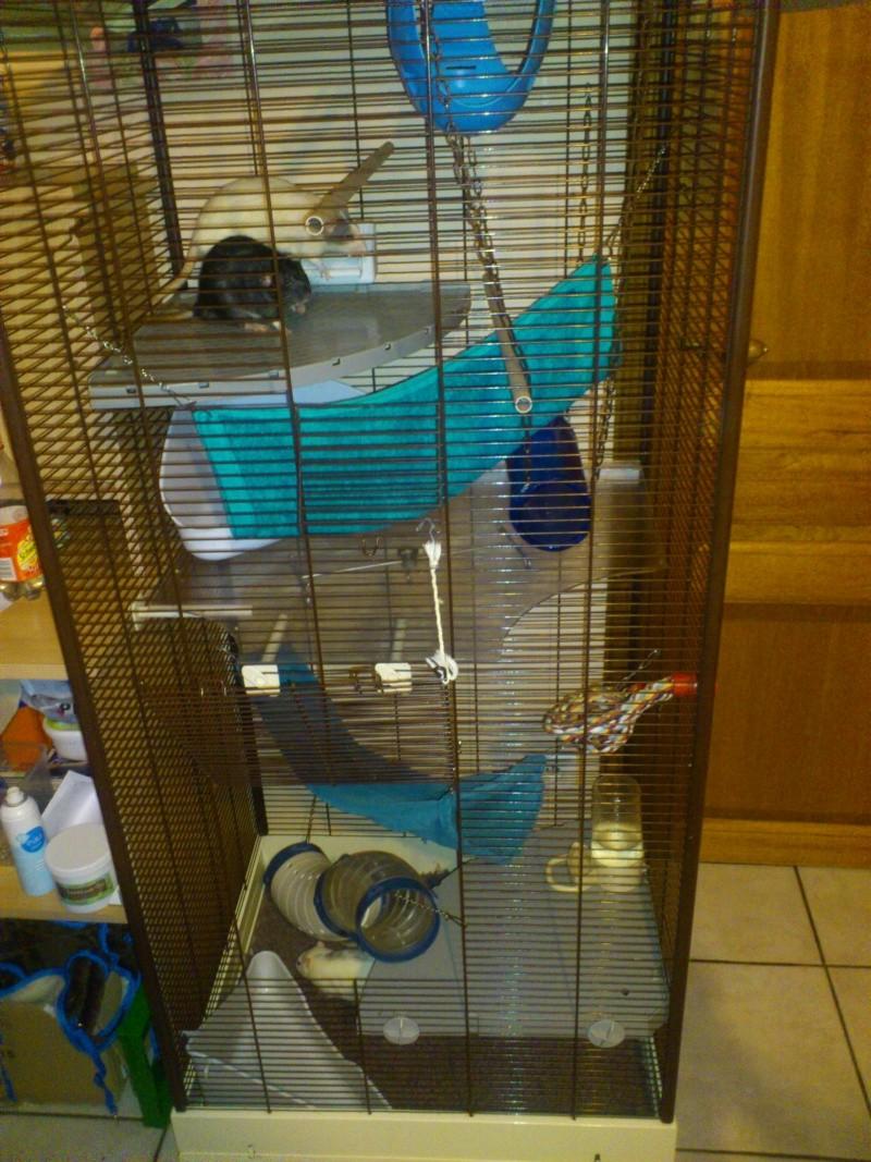 Photos de vos cages - Page 39 Dsc_0810