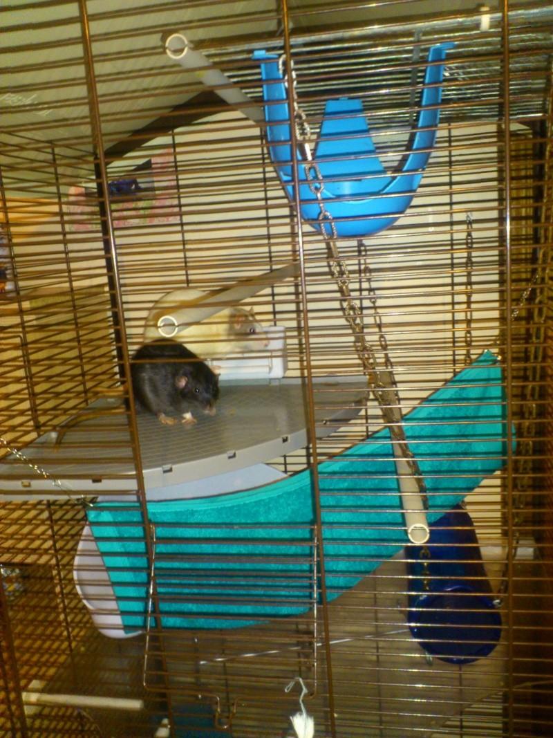 Photos de vos cages - Page 38 Dsc_0811