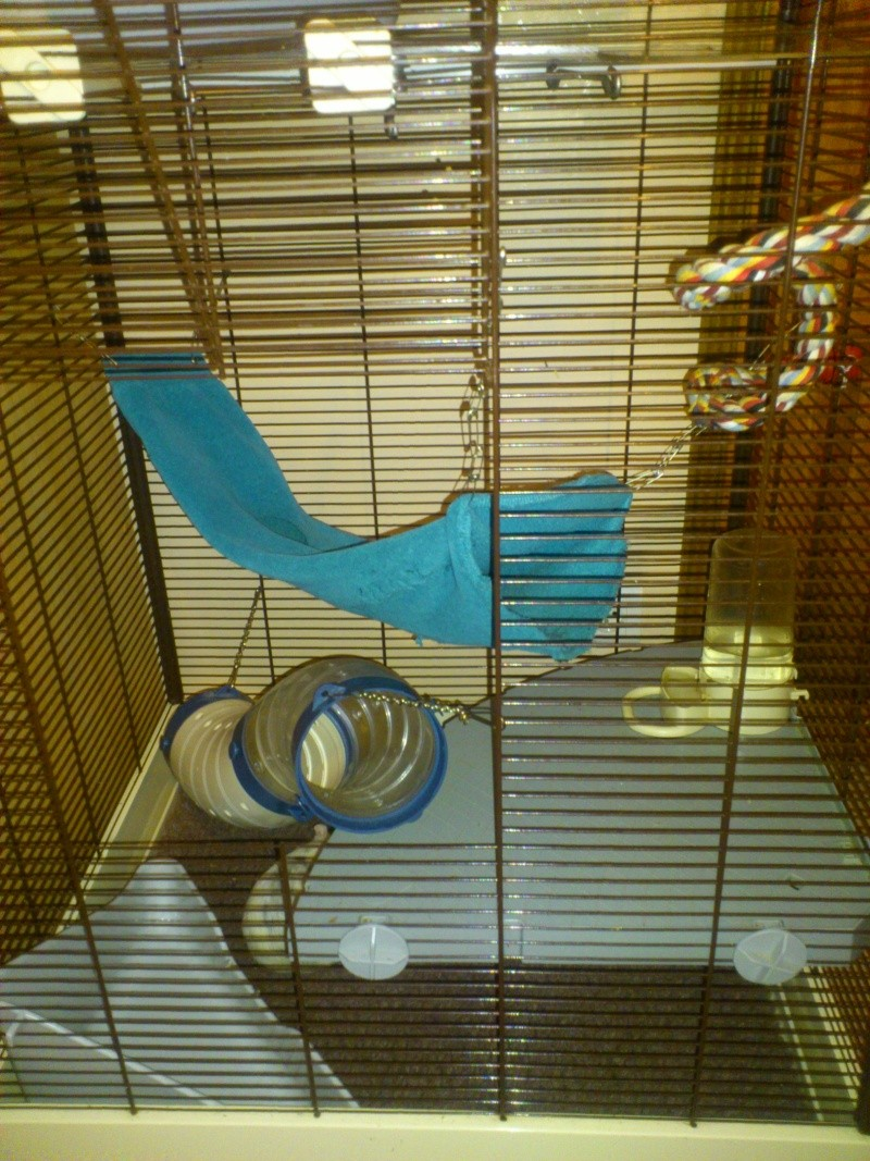 Photos de vos cages - Page 38 Dsc_0812