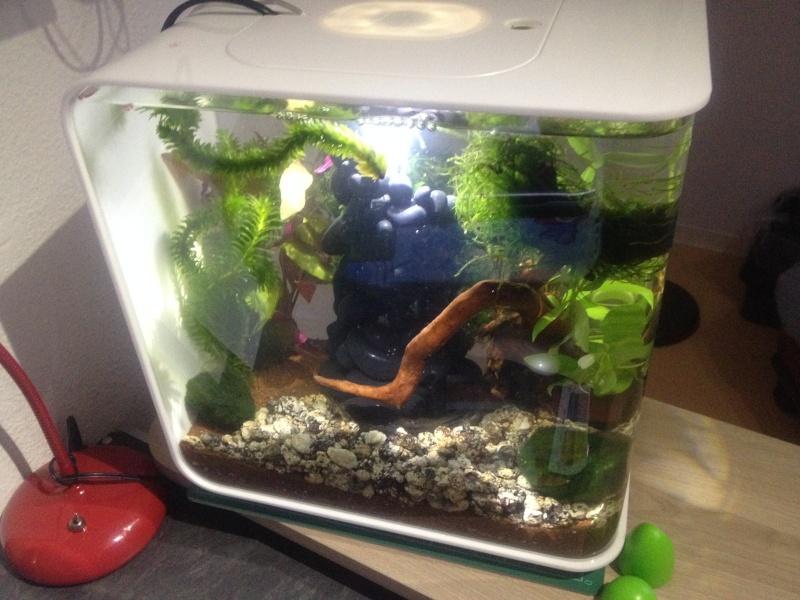 L'aquarium cadeau de Noel de ma fille Image110
