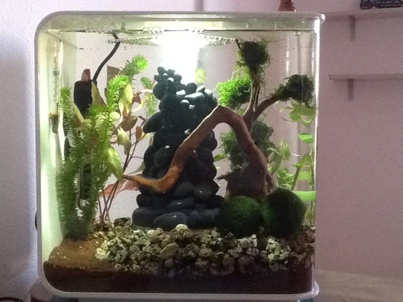 L'aquarium cadeau de Noel de ma fille Image12