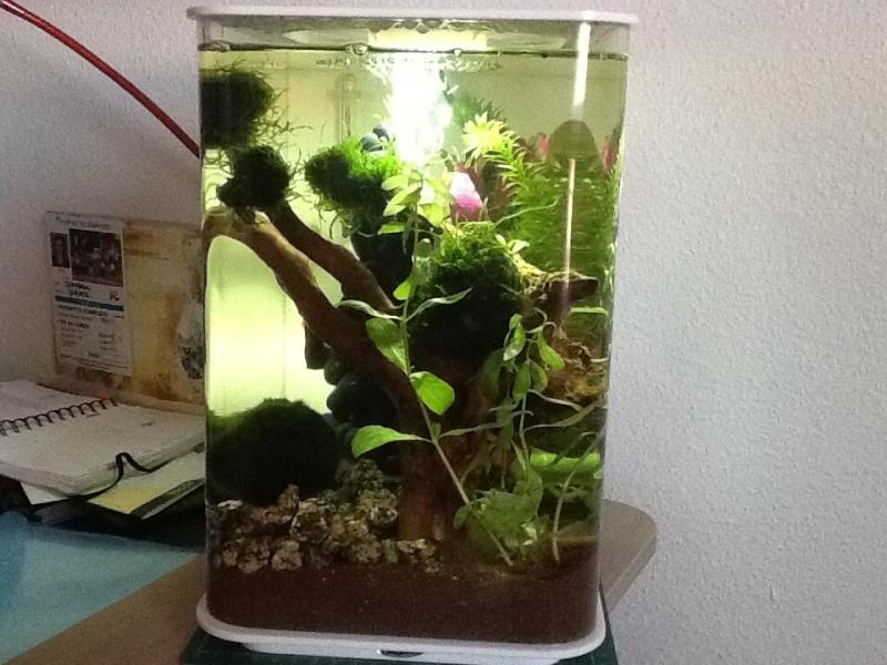 L'aquarium cadeau de Noel de ma fille Image13
