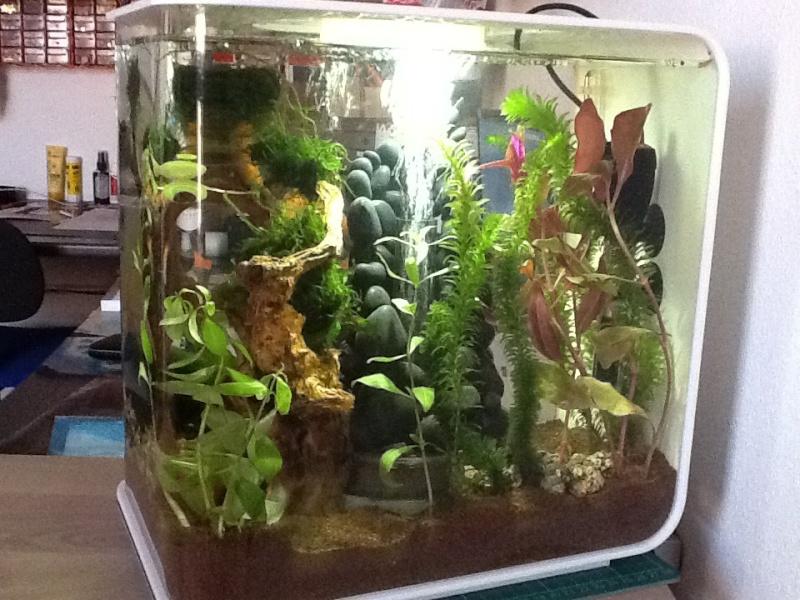 L'aquarium cadeau de Noel de ma fille Image14