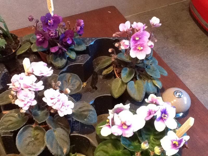 Des petites plantounes nouvelles Image42