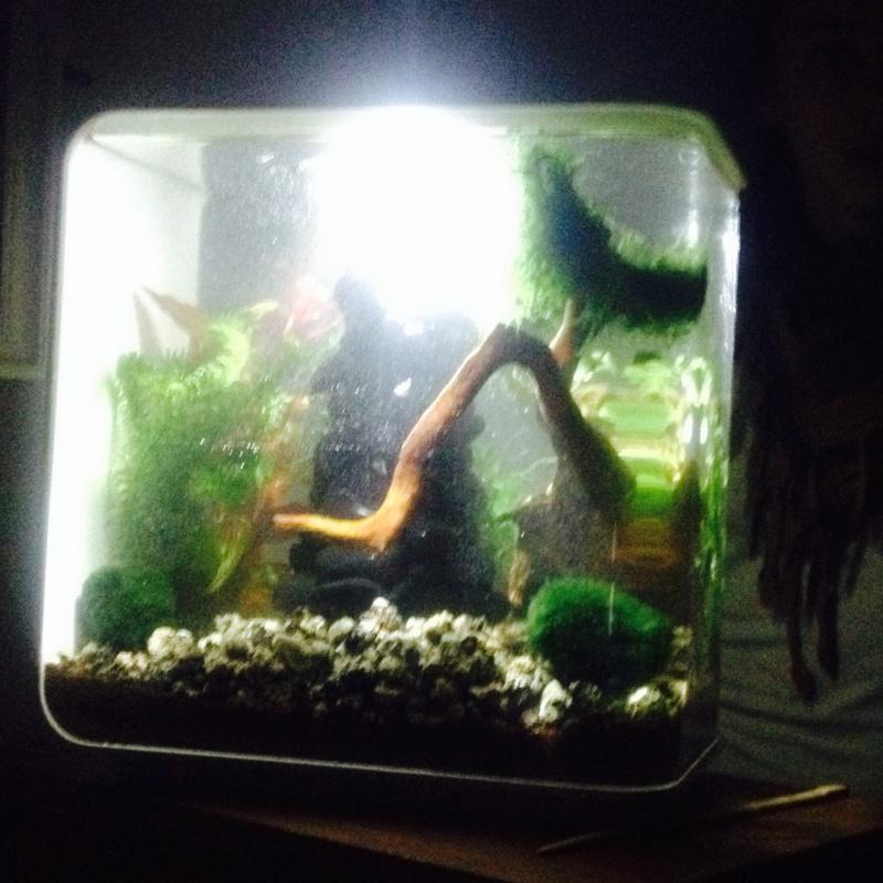 L'aquarium cadeau de Noel de ma fille Image811