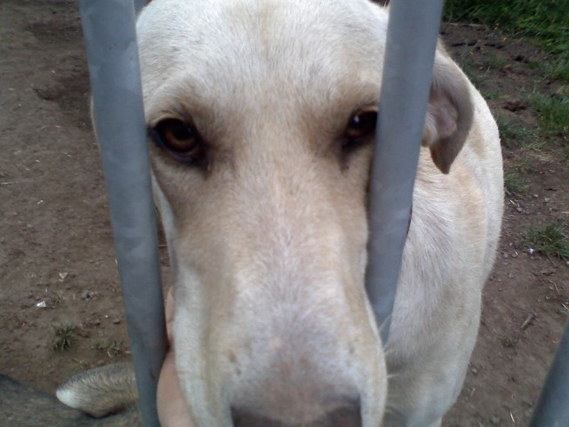 """Photos de vos chiens """"malheureux"""" P03-0610"""