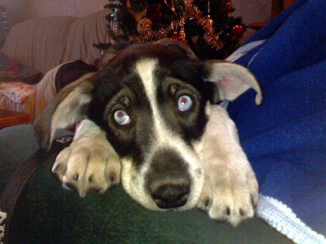 """Photos de vos chiens """"malheureux"""" P04-0110"""
