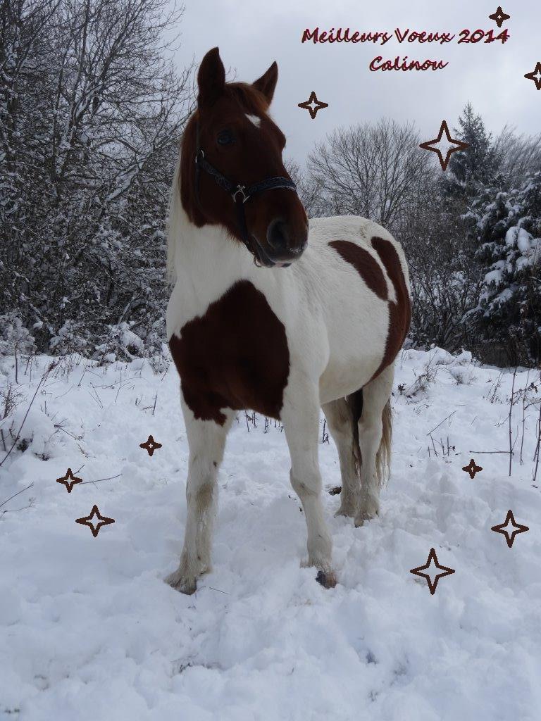 CALINOU  - ONC poney - né en 1999 - adopté en novembre 2012 par Stéphanie - Page 6 Calino11