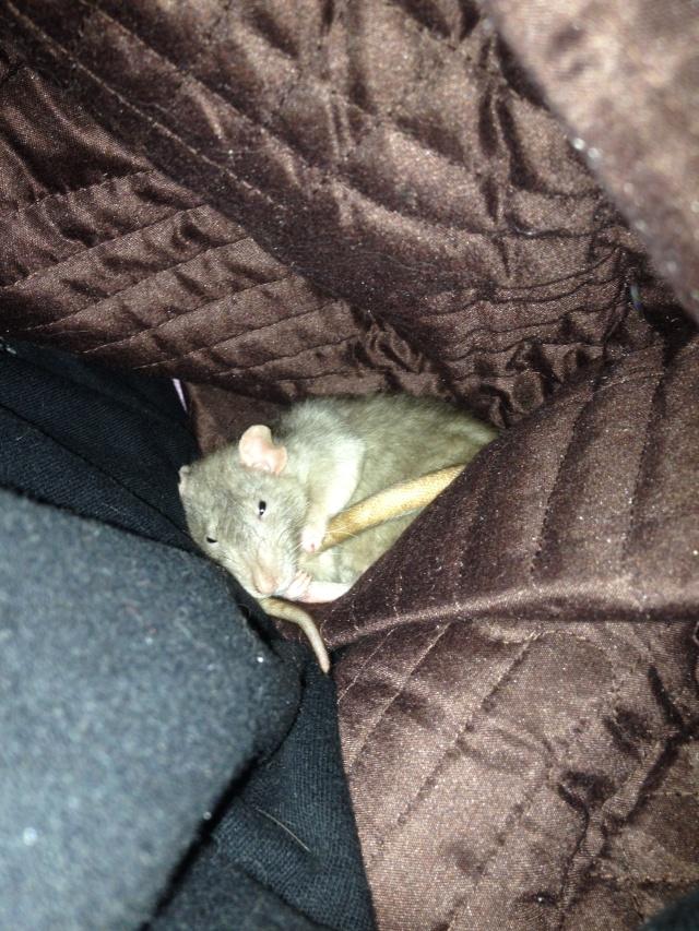 Oyé oyé ! Voici les princesses de Mlle Rat-Leuse ! - Page 3 Img_6810