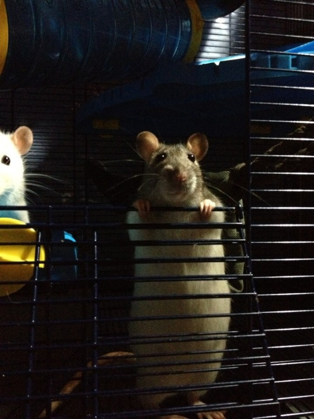 Oyé oyé ! Voici les princesses de Mlle Rat-Leuse ! - Page 3 Img_6812