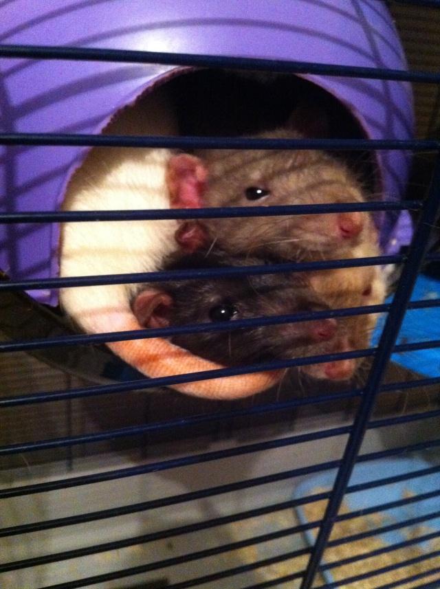 Oyé oyé ! Voici les princesses de Mlle Rat-Leuse ! - Page 3 Img_6910