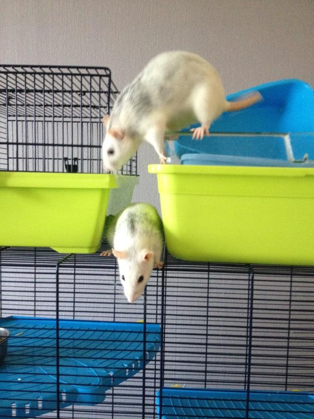 Les ratons de Niort ! - Page 9 Img_7410