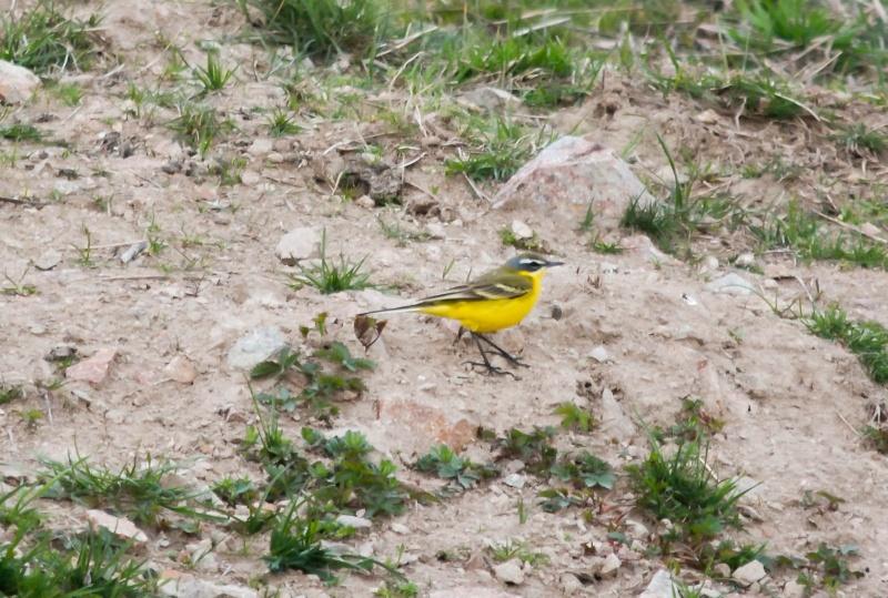 les oiseaux et petites bêtes au cours de nos balades Berger10