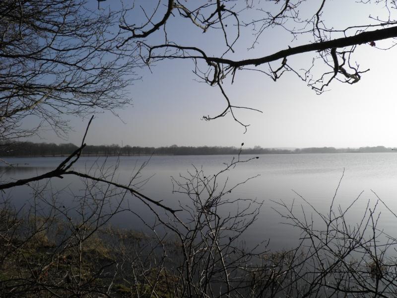 La réserve naturelle de l'étang des Landes (23) P3030010