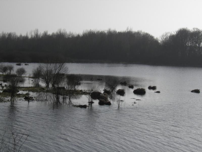 La réserve naturelle de l'étang des Landes (23) P3030011