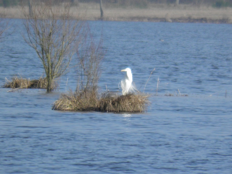 La réserve naturelle de l'étang des Landes (23) P3030012