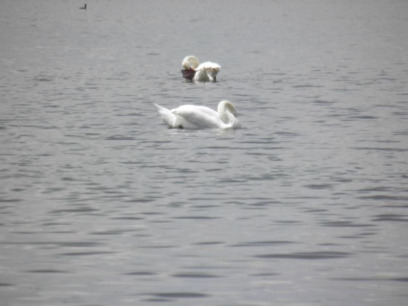 La réserve naturelle de l'étang des Landes (23) P5280010