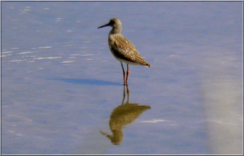 La réserve naturelle de l'étang des Landes (23) Sans_t24