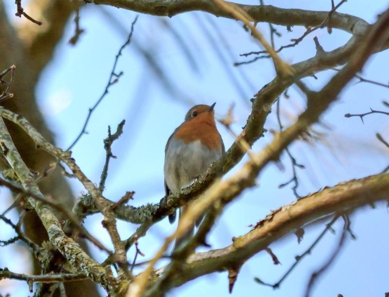 les oiseaux et petites bêtes au cours de nos balades Sans_t66