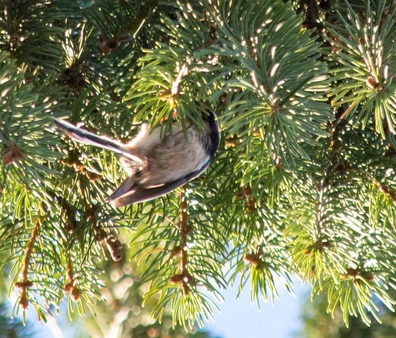 les oiseaux et petites bêtes au cours de nos balades Sans_t67
