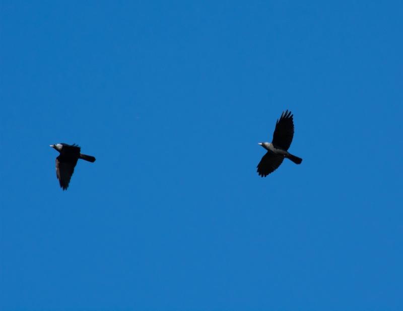 les oiseaux et petites bêtes au cours de nos balades - Page 2 Sans_t68