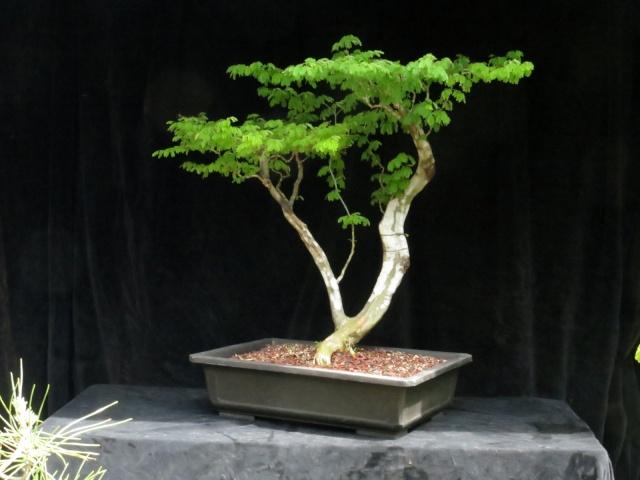 Future Flat Top, Raintree Img_2712