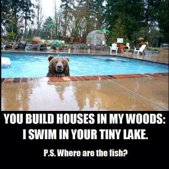 Do bears swim in pools?  Bear_i10